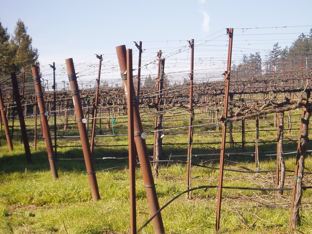 wine-country-fence